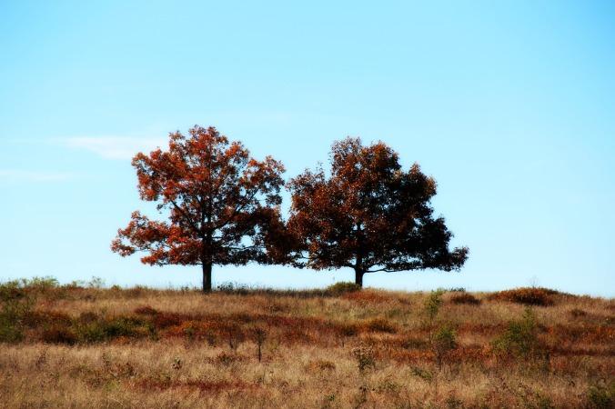 FallTwinTrees