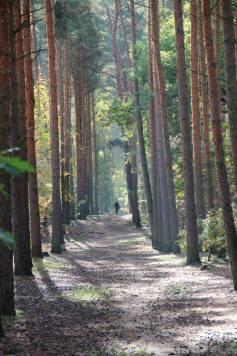 grunewaldtrees
