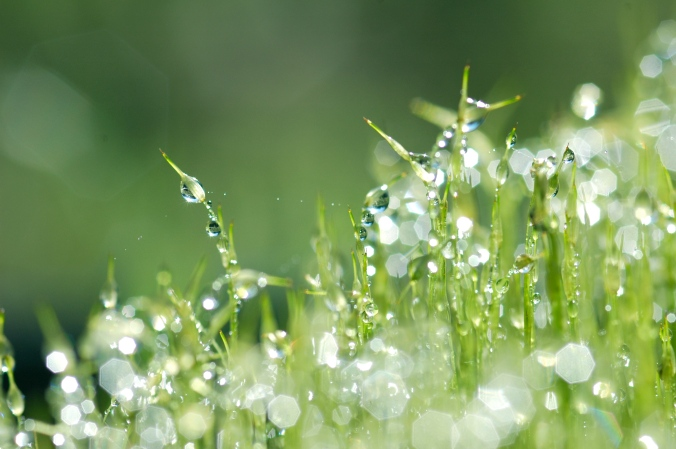 Moss_Dew